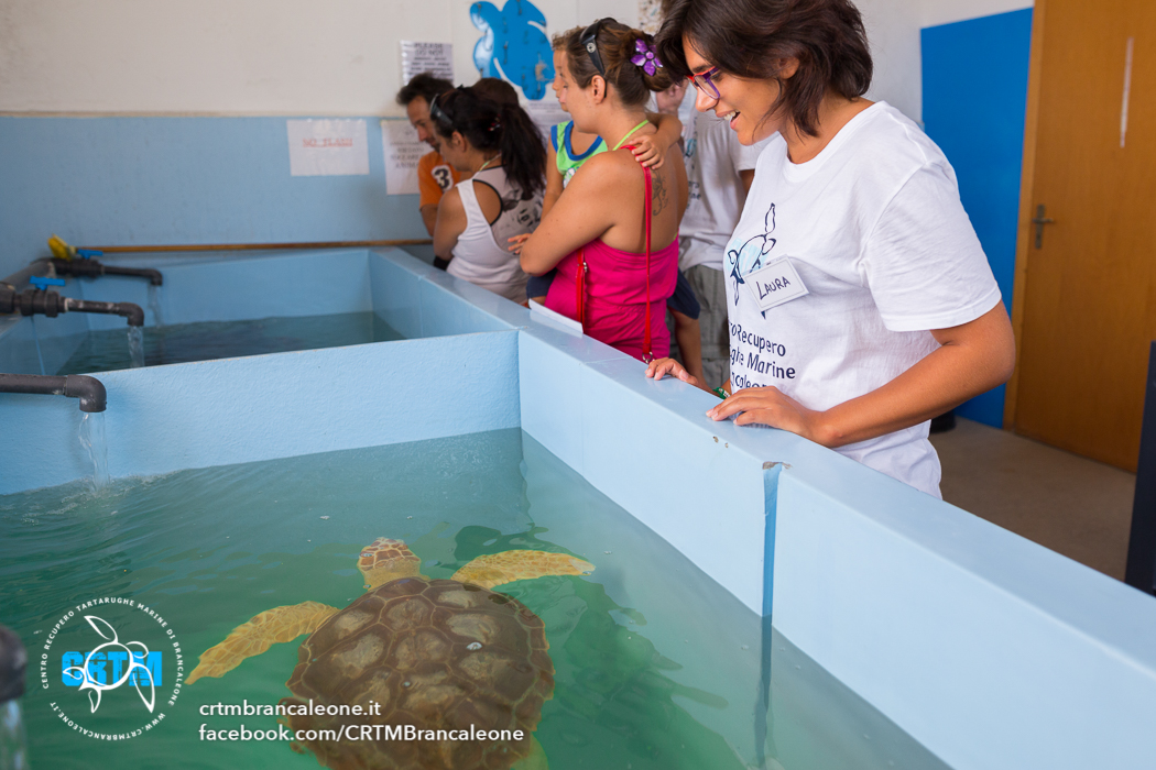tartarughe brancaleone