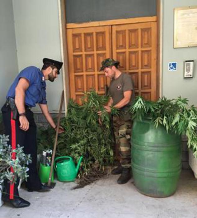 Un arresto dei Carabinieri a Gioia Tauro per coltivazione canapa indiana marijuana