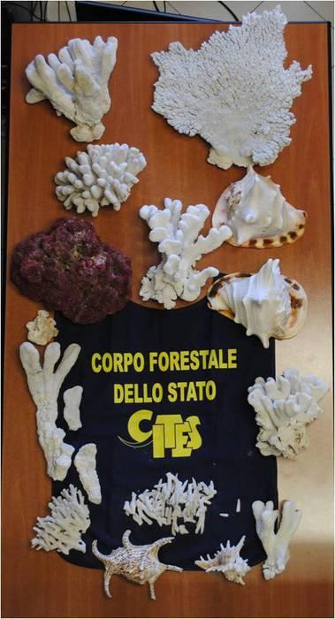 Foto Ansa - Cfs sequestra coralli e conchiglie a Reggio Calabria