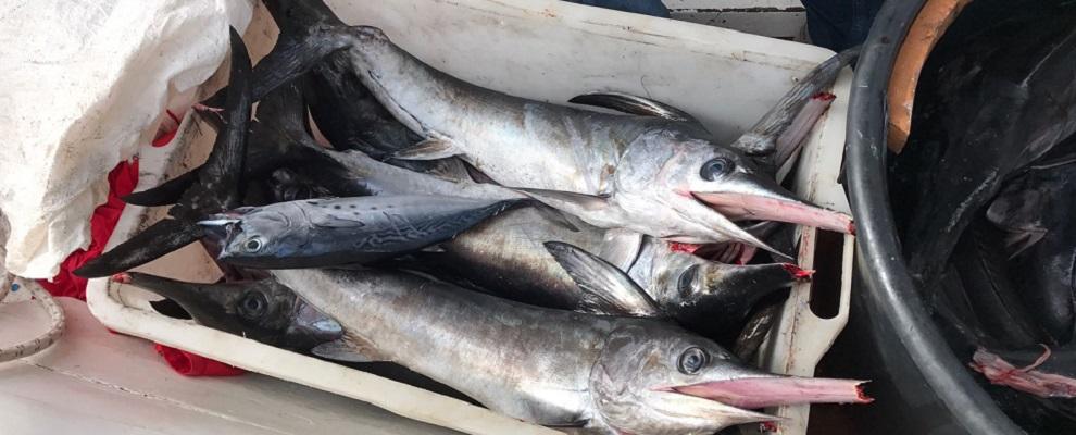 roccella guardia costiera sequestro pesce ev