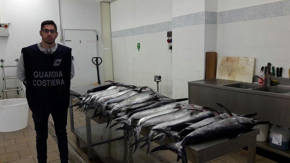 guardia costiera pesce spada